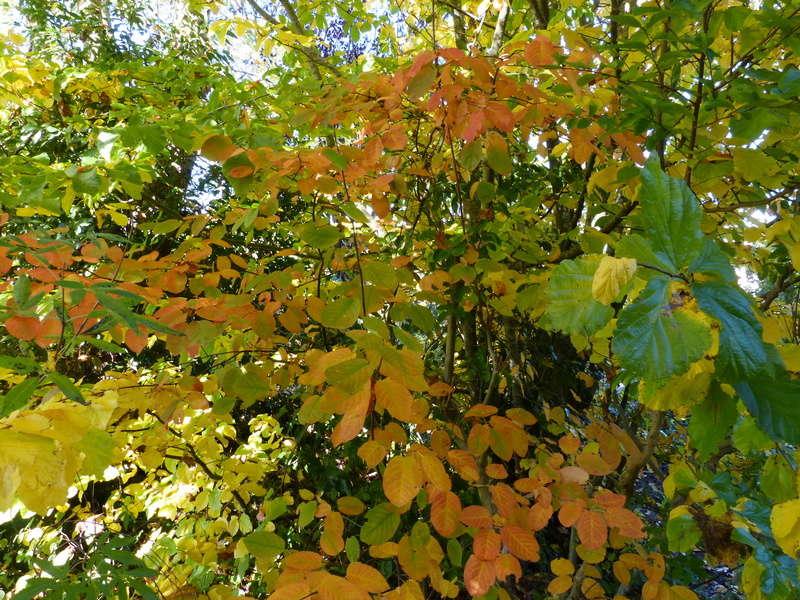 feuillages d'automne 2016 Amelan10