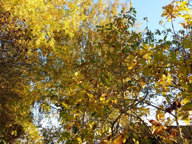 feuillages d'automne 2016 Automn11