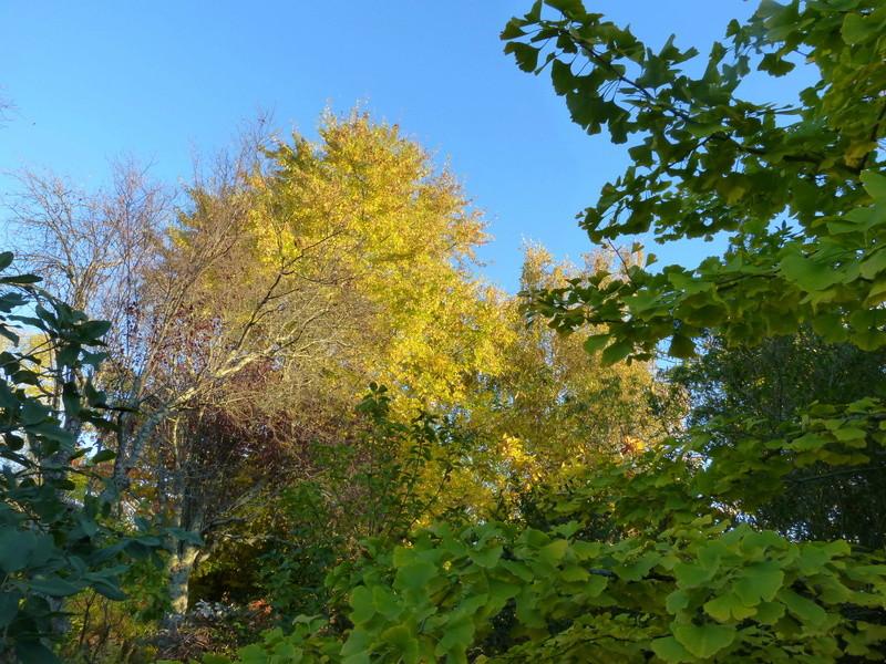 feuillages d'automne 2016 Automn13