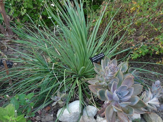 ondées d'octobre, le jardin renaît - Page 2 Dasyli10