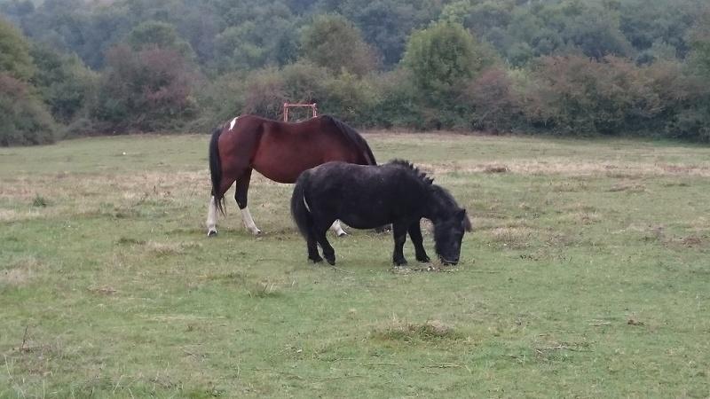 KIWI et CAPUCINE (décédée) - ONC poney présumées nées en 1990 - adoptées en octobre 2008 par caro38 - Page 2 Dsc_0310
