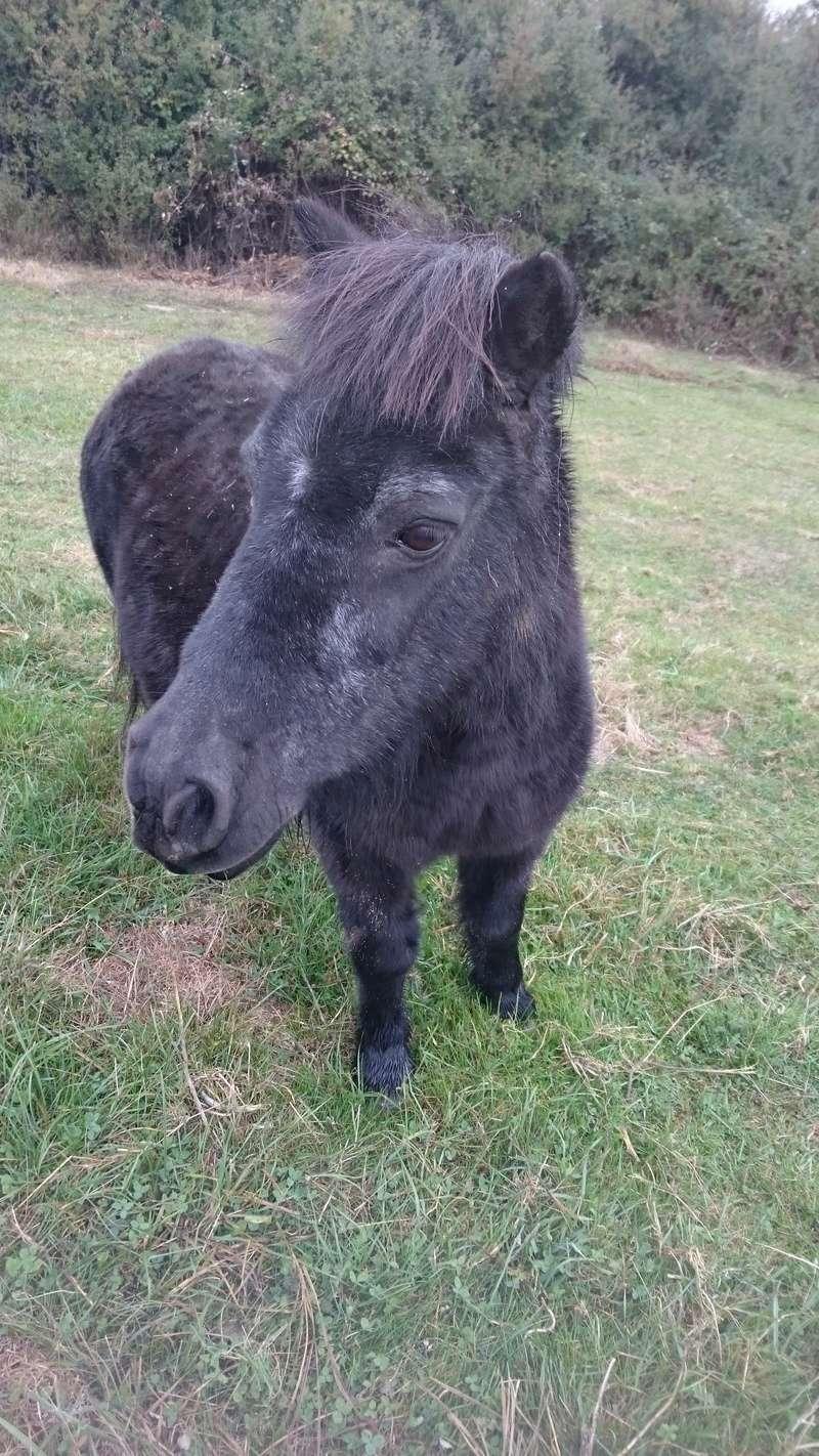 KIWI et CAPUCINE (décédée) - ONC poney présumées nées en 1990 - adoptées en octobre 2008 par caro38 - Page 2 Dsc_0311