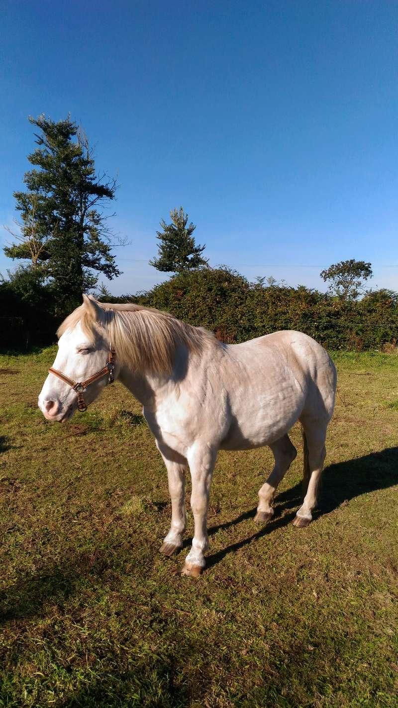 FLOCON  - ONC Poney né en 1998 - adopté, avec Neige, par la bénévole de l'association Flocon10