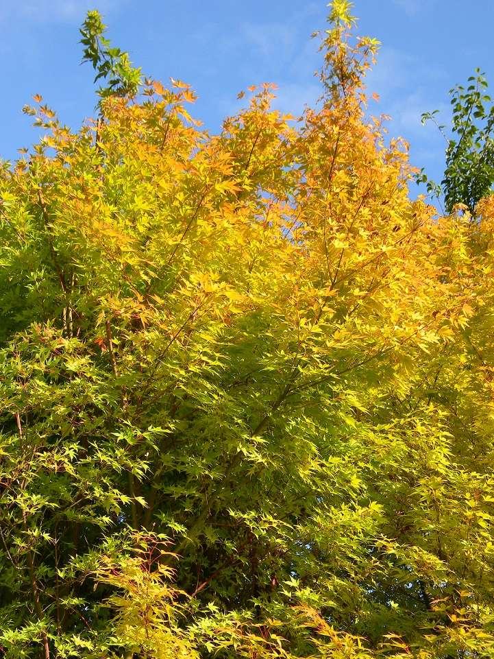 ondées d'octobre, le jardin renaît - Page 2 Octo210