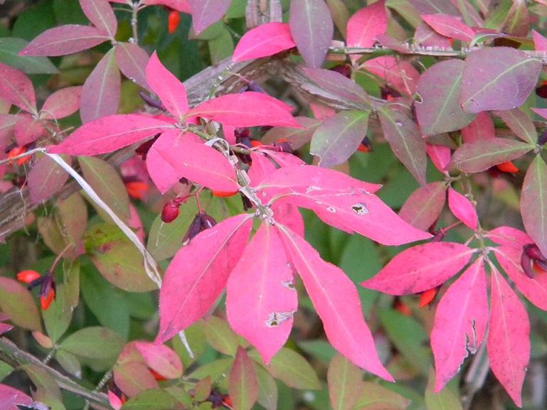 ondées d'octobre, le jardin renaît - Page 2 Octo310
