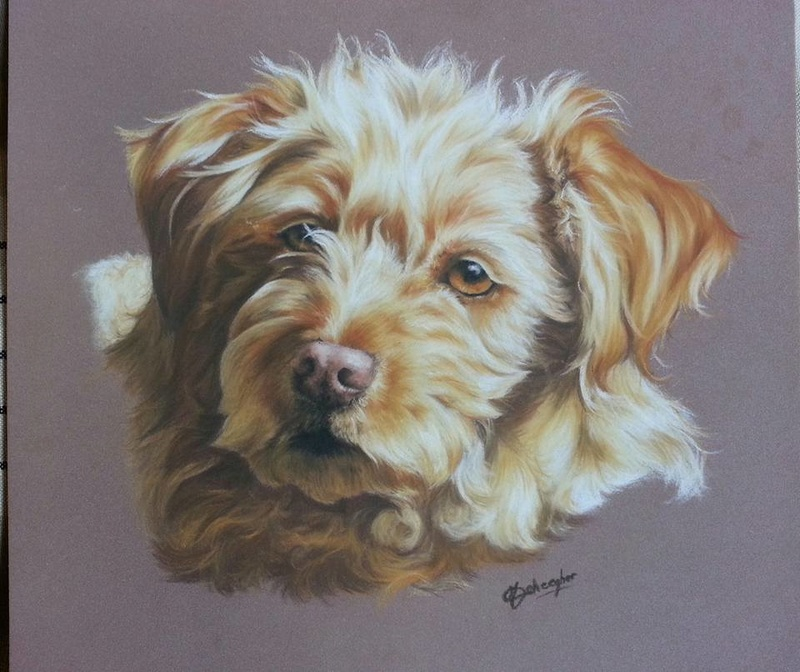 Marie Deheegher - Artiste Animalier - Page 2 Mimief10