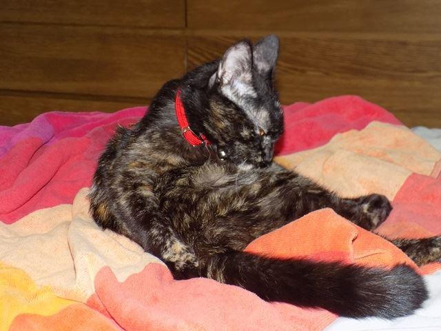 Lilo, Femelle européenne (01/01/2015) 14034710