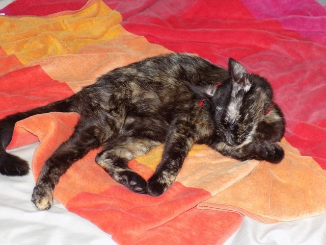 Lilo, Femelle européenne (01/01/2015) 14089010