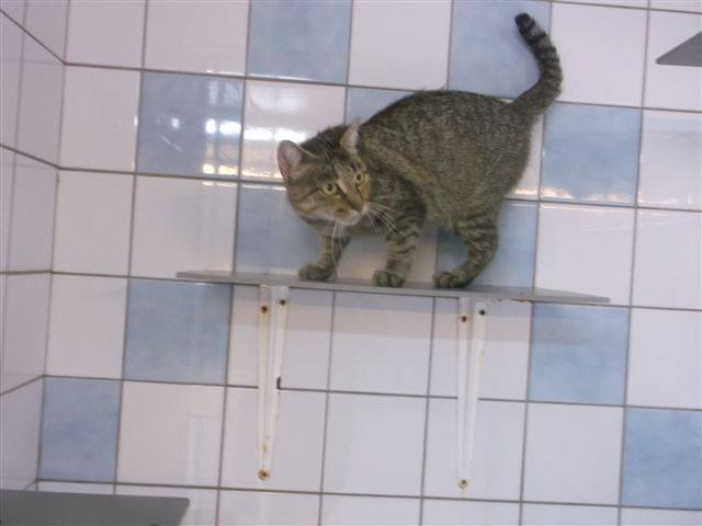 EXTRÊME URGENCE fourrière le 7 octobre pour 5 chats 14463210