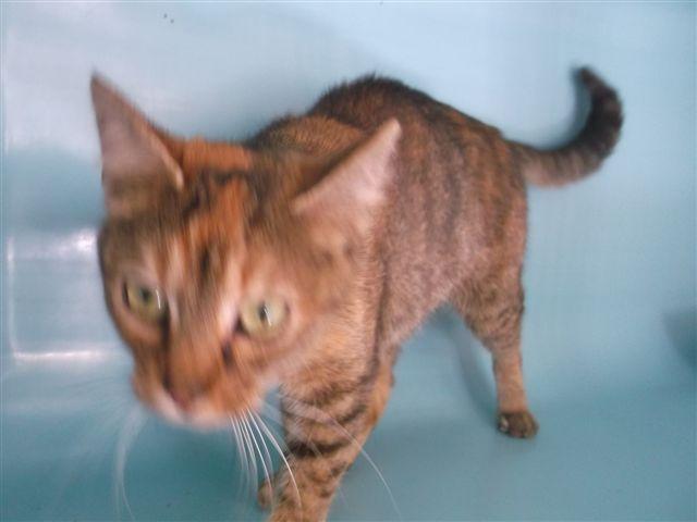 EXTRÊME URGENCE fourrière le 14 octobre pour 7 chats 3310
