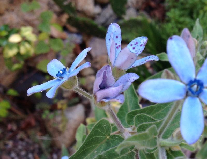 ondées d'octobre, le jardin renaît Img_2110