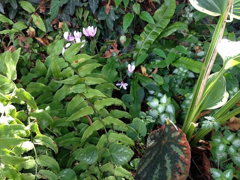 ondées d'octobre, le jardin renaît Img_2111