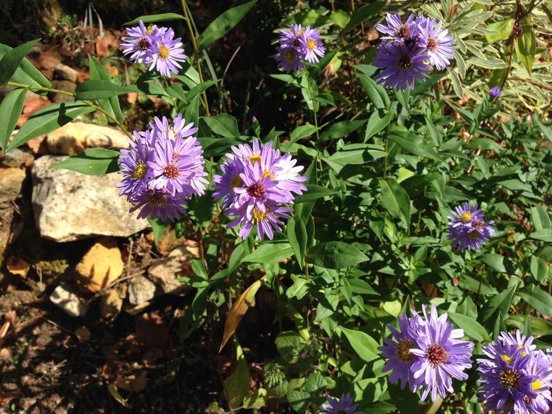 ondées d'octobre, le jardin renaît Img_2112