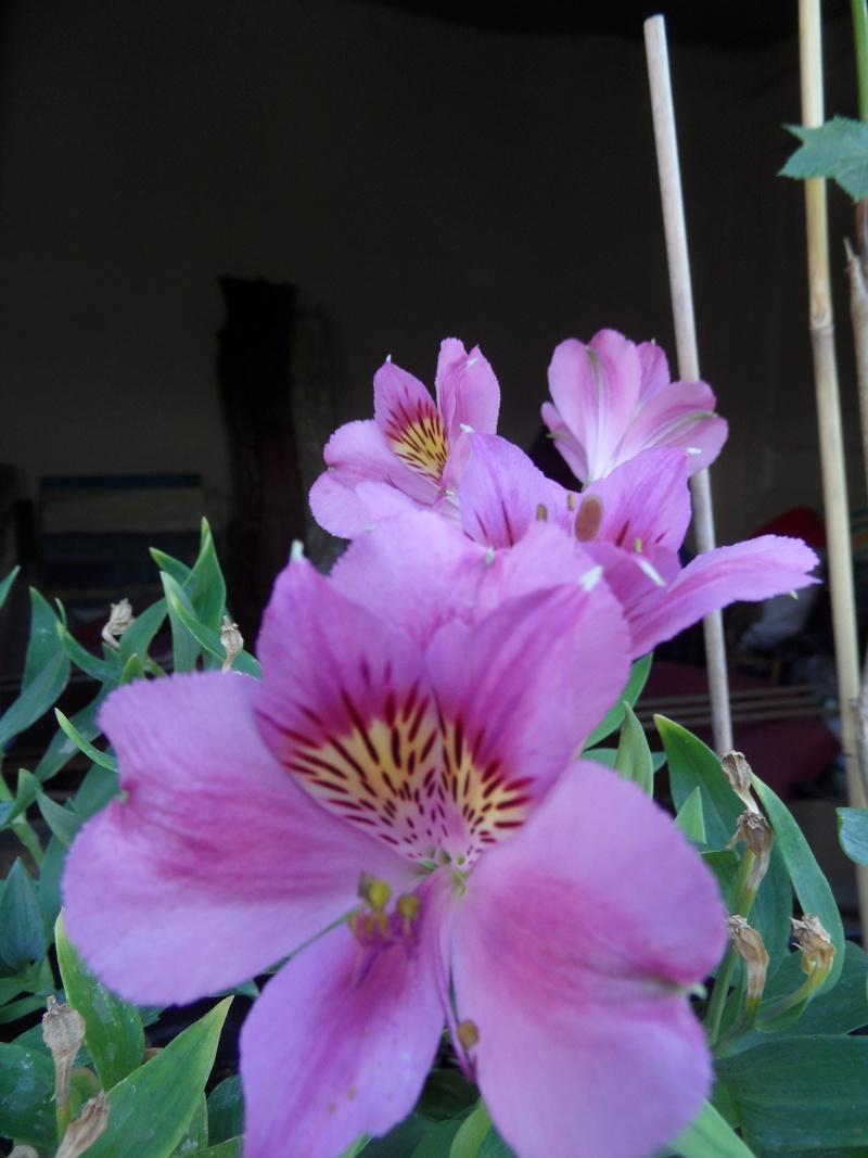 Floraisons du mois de septembre - Page 11 00812