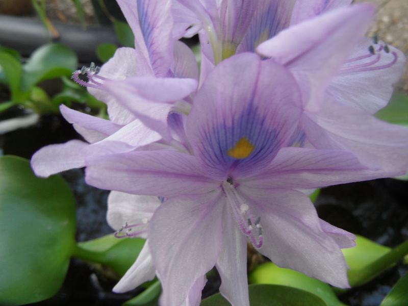 Floraisons du mois de septembre - Page 11 01310