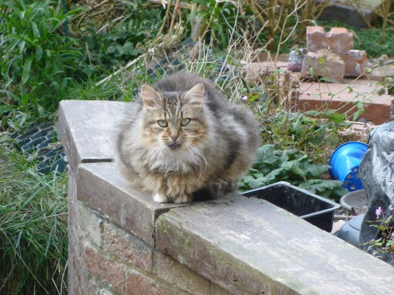 PEANUTS, belle petite chatte renversée par une voiture P1030722