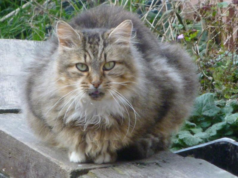 PEANUTS, belle petite chatte renversée par une voiture P1030723