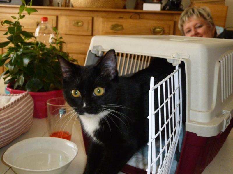 SOQUETTE, adorable chatonne de deux mois noire avec chaussons blancs - Page 3 P1030724