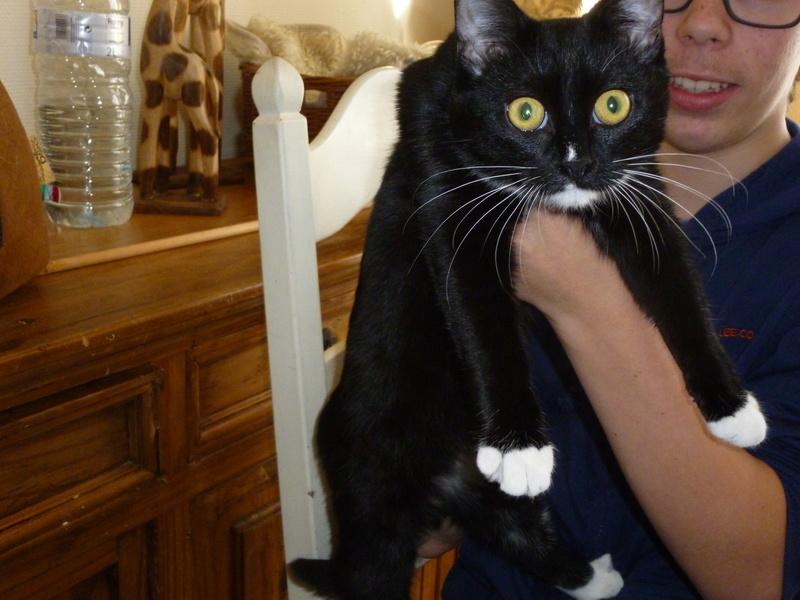 SOQUETTE, adorable chatonne de deux mois noire avec chaussons blancs - Page 3 P1030725