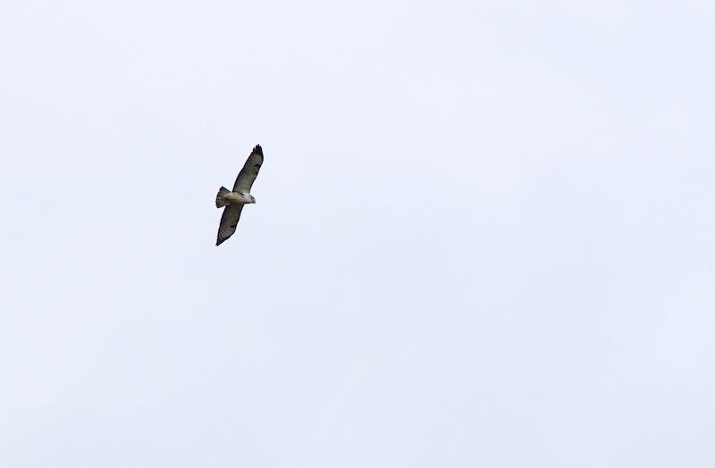 oiseaux Oiseau10