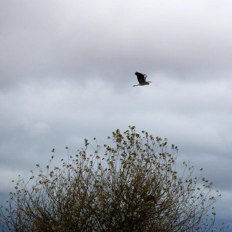 oiseaux Oiseau11