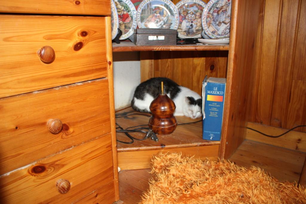 PEPITE - Mâle- Européen tigré gris et blanc - 02/04/2011 - 250269604906114 -  FIV+ - Page 3 Img_4910
