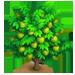 Vous cherchez un arbre ? Venez cliquer ici !!! Cherim15