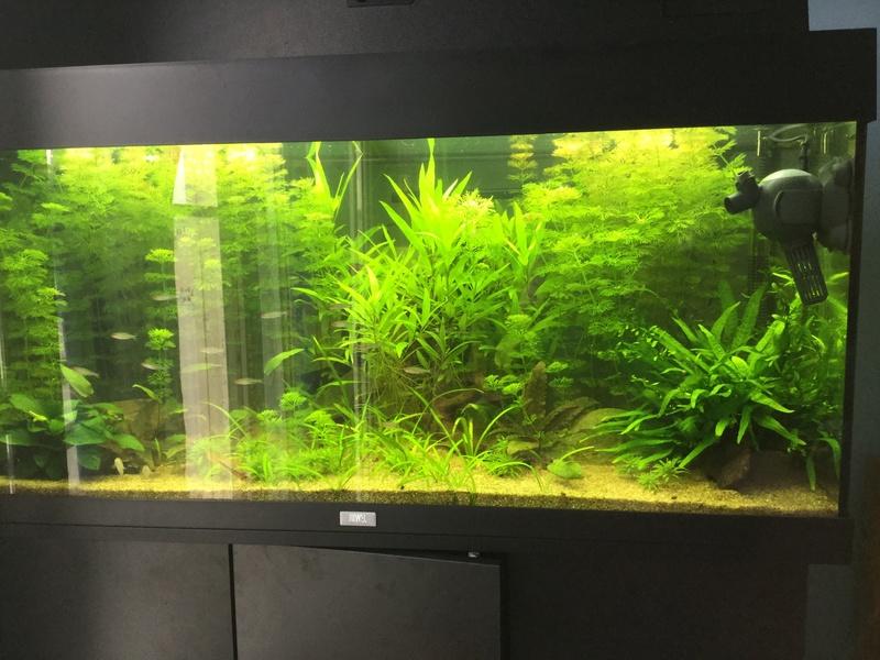 URGENT Algues filamenteuses vertes et carences Image24