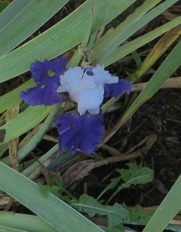 Blue..........bleu !!! - Page 13 00121