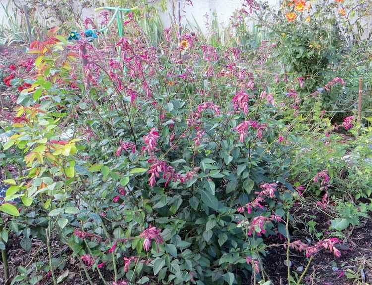 Le jardin en rose ! - Page 2 001_210