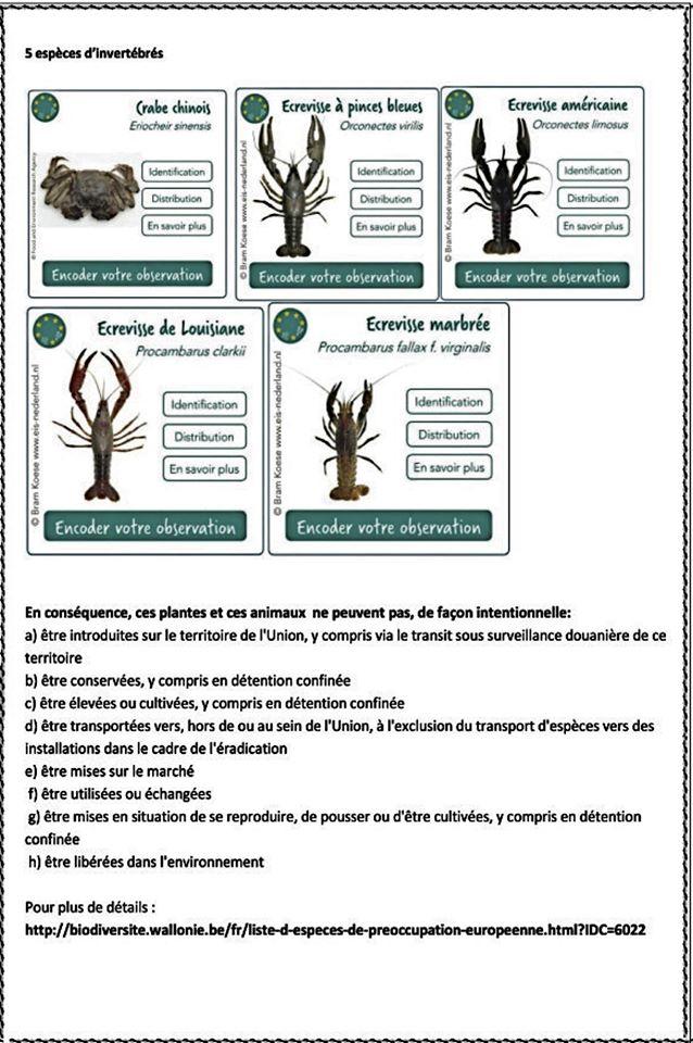 Espéces invasive interdites en Europe Invasi11