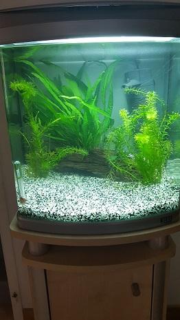 Nouvel aquarium 45L, quelle population? 20160910