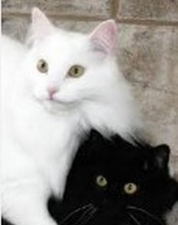noir et blanc 2016-114