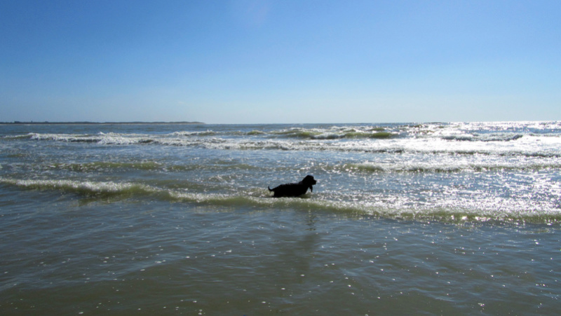 Photos de mes dernières vacances, la côte d'Opale  Img_1610