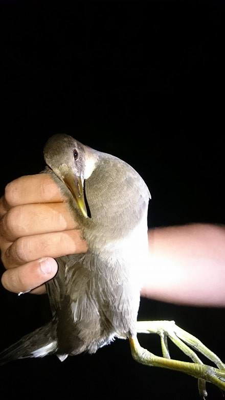Quel est cet oiseau ? Oiseau10
