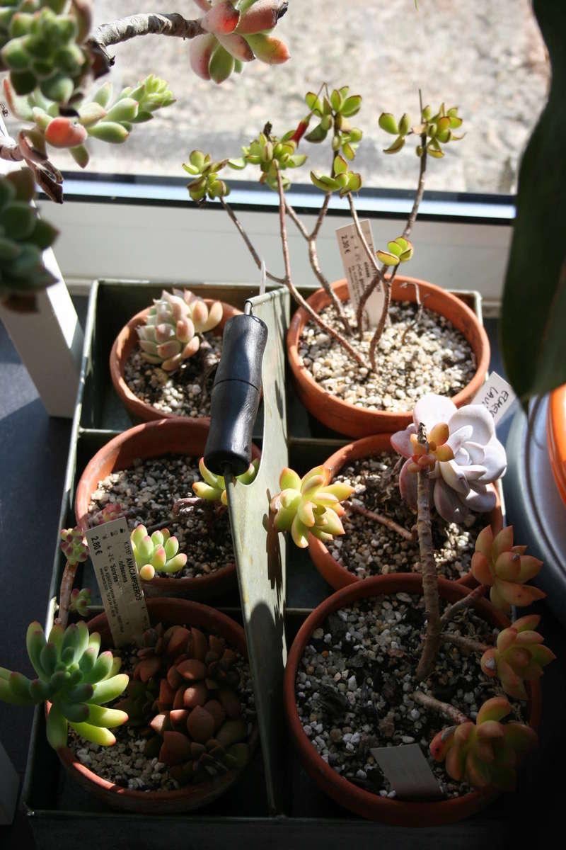 hivernage de mes succulentes Img_3422