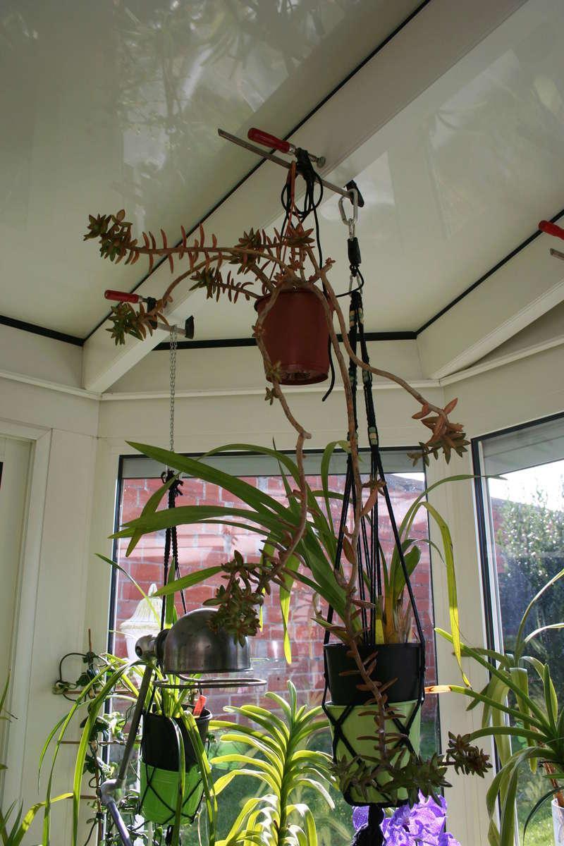 hivernage de mes succulentes Img_3428