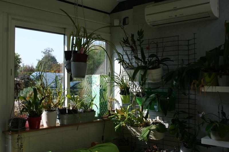 ma véranda, mon petit paradis végétal ... - Page 38 Img_3429