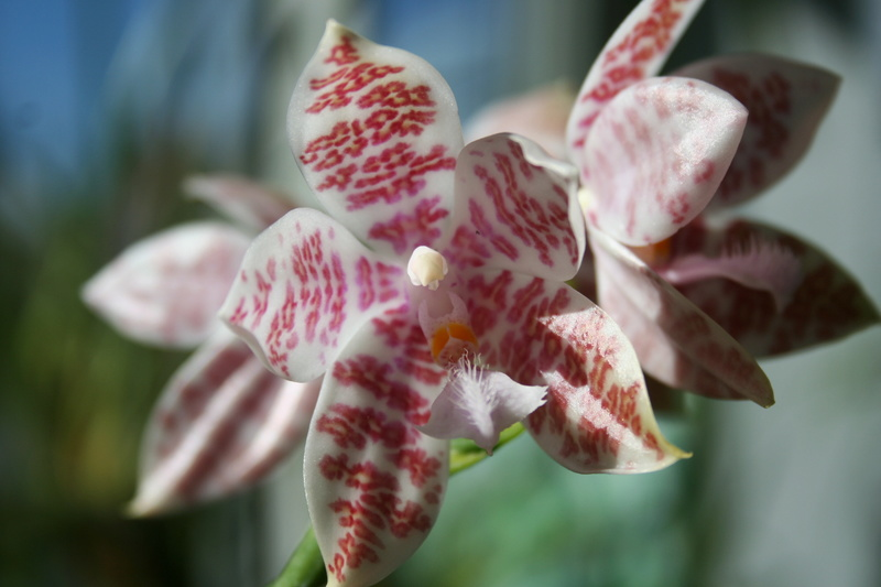 la journée des plantes a Chantilly Img_3442