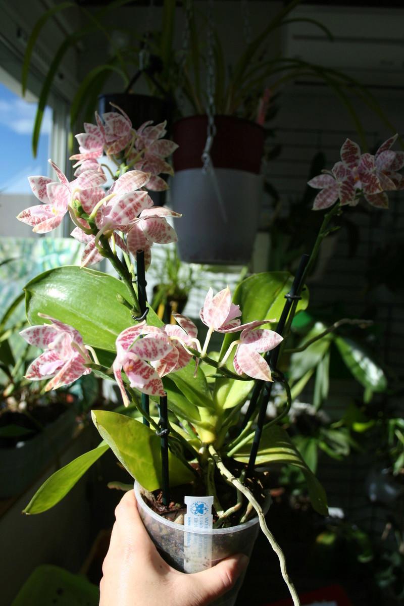 la journée des plantes a Chantilly Img_3443