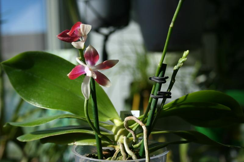 la journée des plantes a Chantilly Img_3448