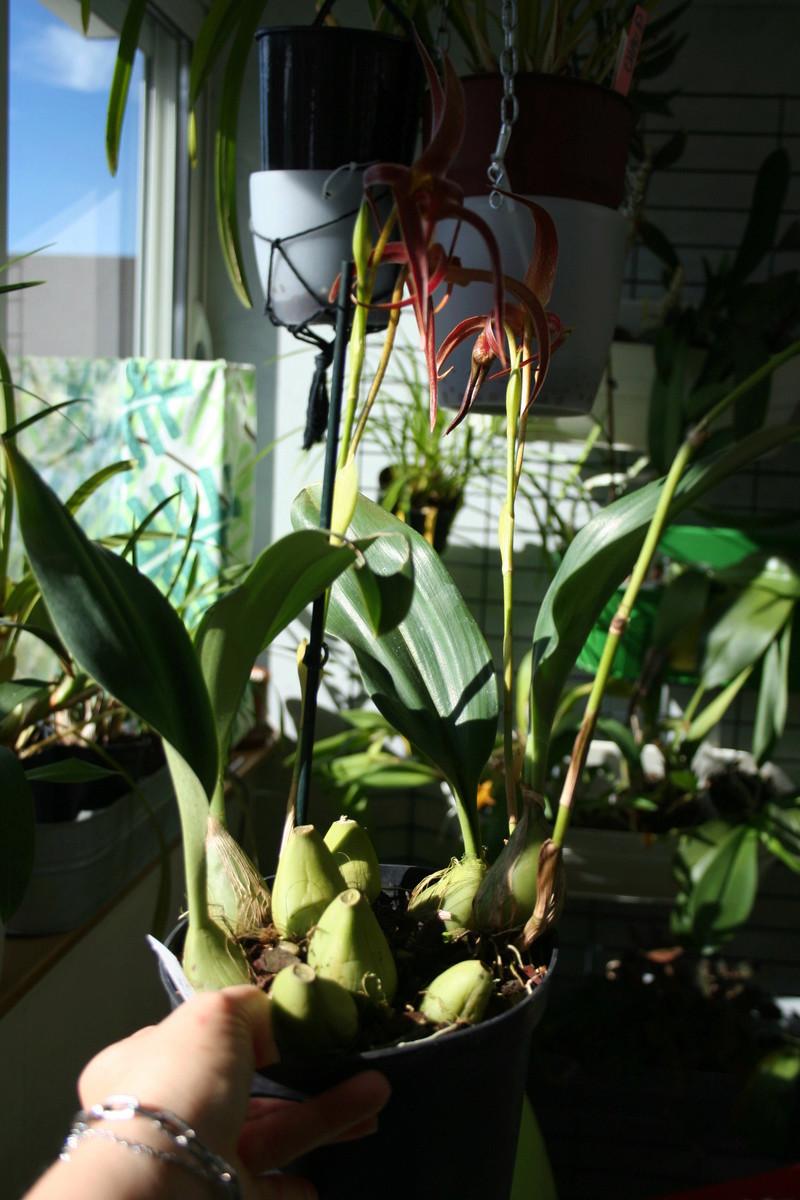 la journée des plantes a Chantilly Img_3451