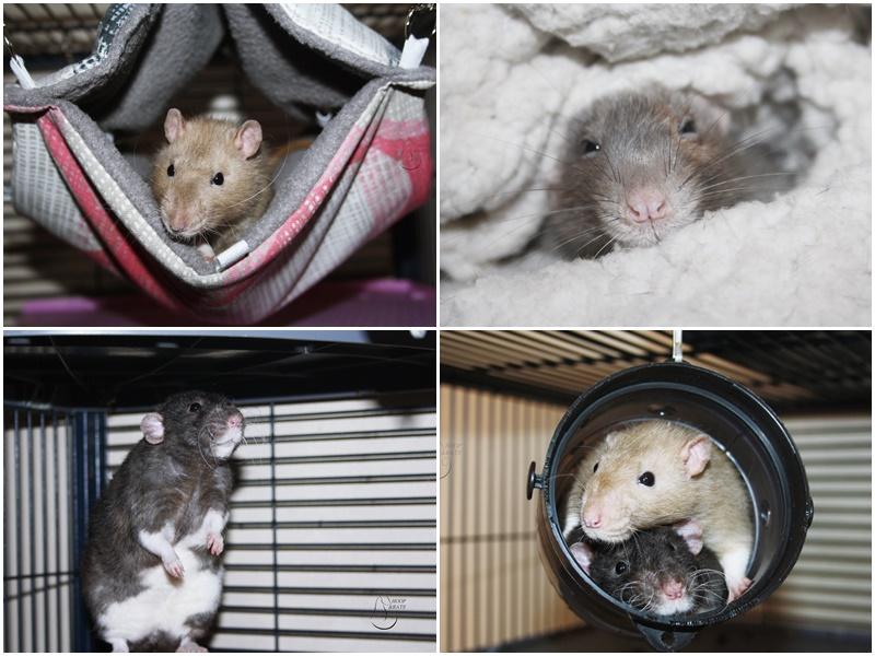 Les Hoop & Rats - Page 4 Cats11