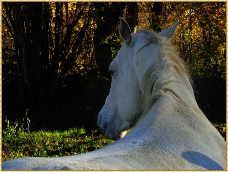 CONCOURS PHOTOS : le cheval et l'automne Dsc08310