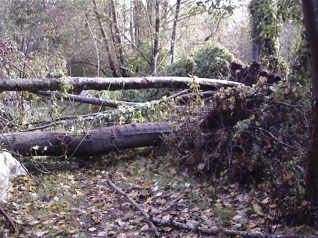 Mother Nature has Dealt Us a Devastating Blow! 1-down10