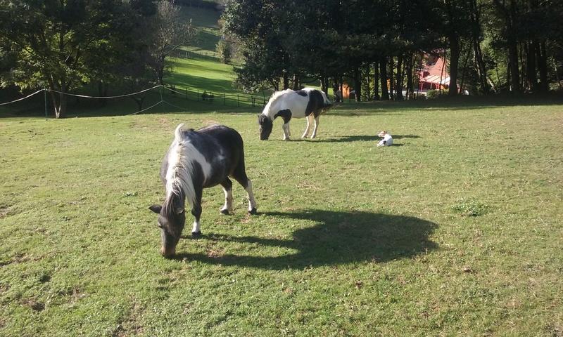 PRUNELLE - ONC poney née en 1986  - adoptée en octobre 2012 par Prosper - Page 4 Prunel12
