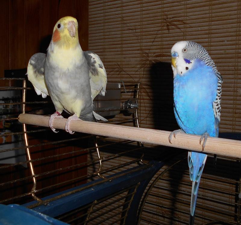 Mes colocataires à plumes ! - Page 4 Dscn0010