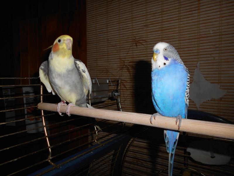 Mes colocataires à plumes ! - Page 4 Dscn0012