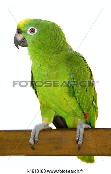 Photos d'oiseaux sur fond blanc K1813110