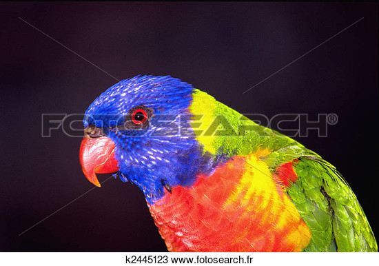 Photos d'oiseaux sur fond blanc K2445110